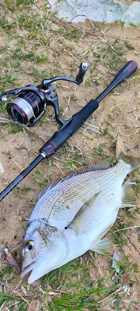 Solid Bream from the mouth